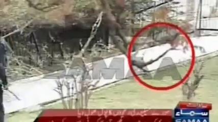News video: Wild boar outwits security guards at Pakistan Supreme Court